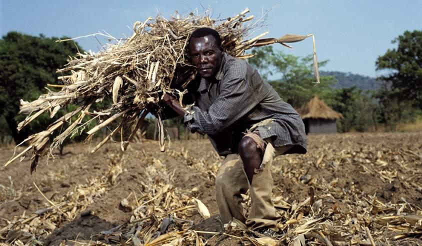 6d7f13c0a8b4 Måske kan landarbejdere i Zambia få glæde af danske mikrolån med støtte fra  IFU. (